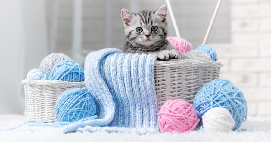 Katze mit Wolle