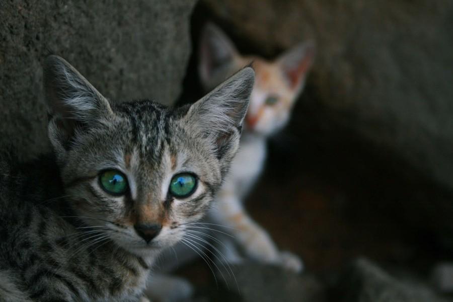 Katze macht große Augen