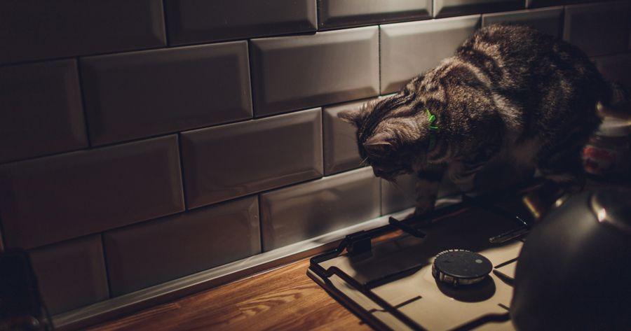 Katze nachts in Küche