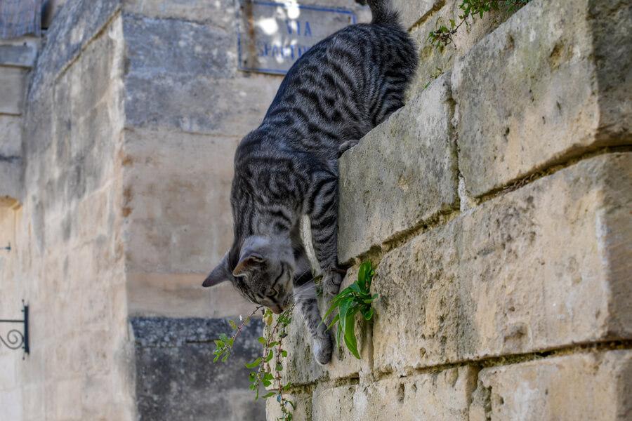 Katze springt
