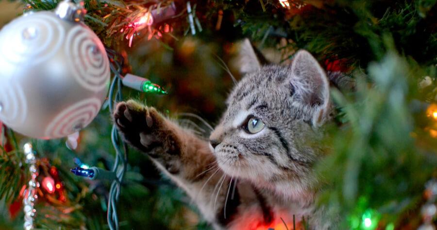 Katze und Christbaumkugel