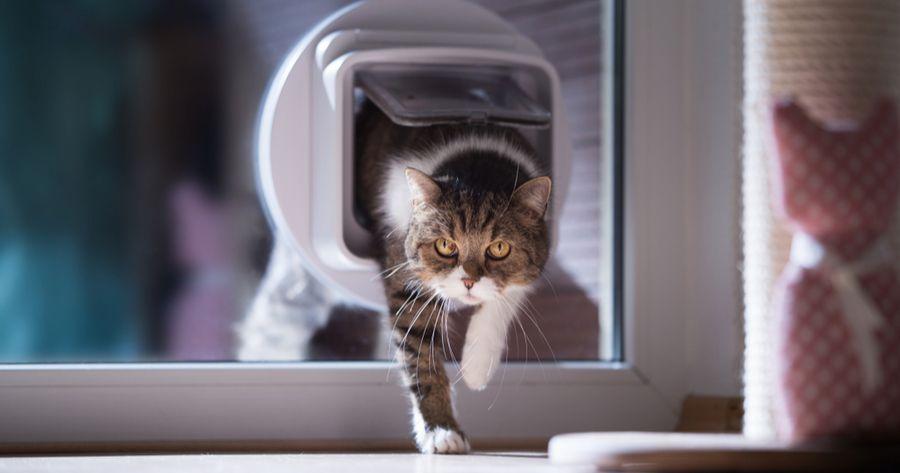 Katzenklappe