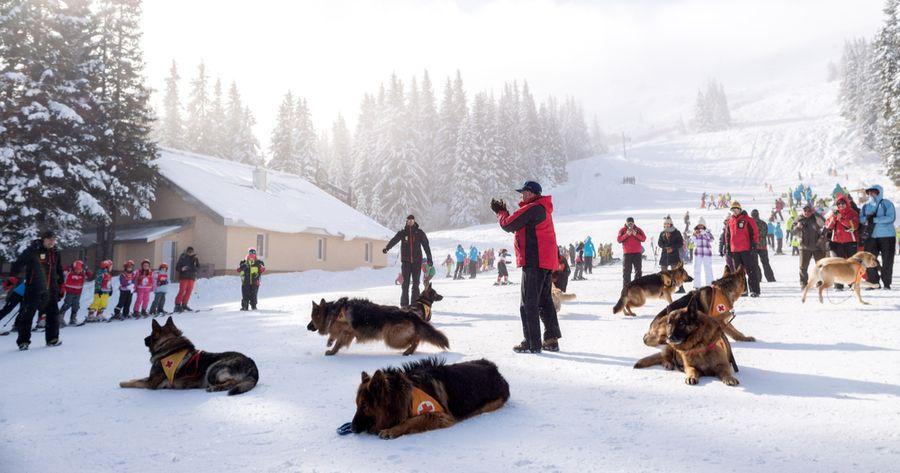 Lawinenhund Ausbildung
