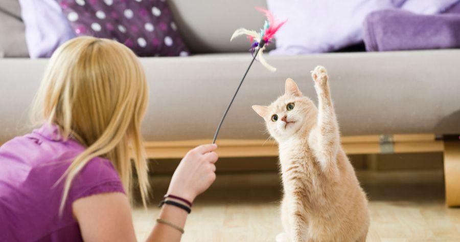 Frau spielt mit Katze