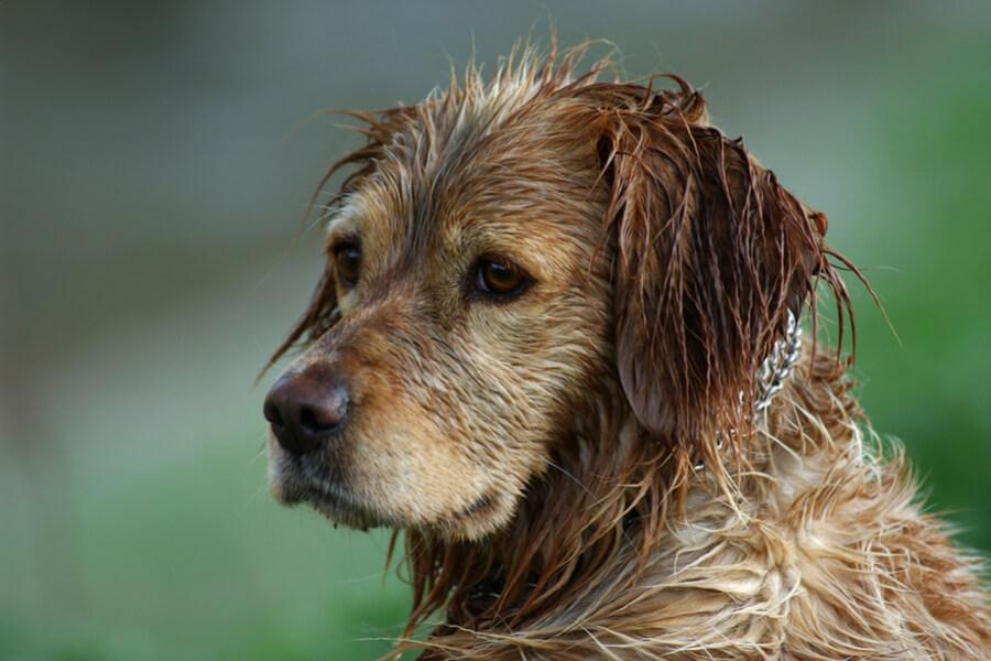 remedios infeccion orina perros