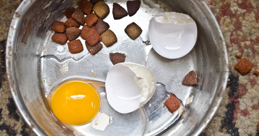 Rohes Ei und Eierschale