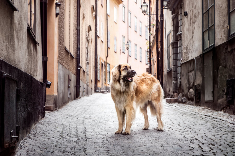 Stockholm mit Hund
