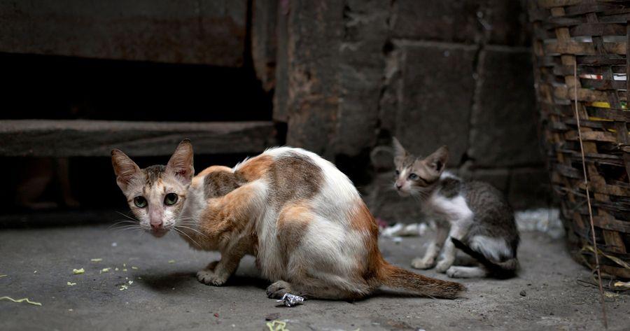 Straßenkatze in Asien