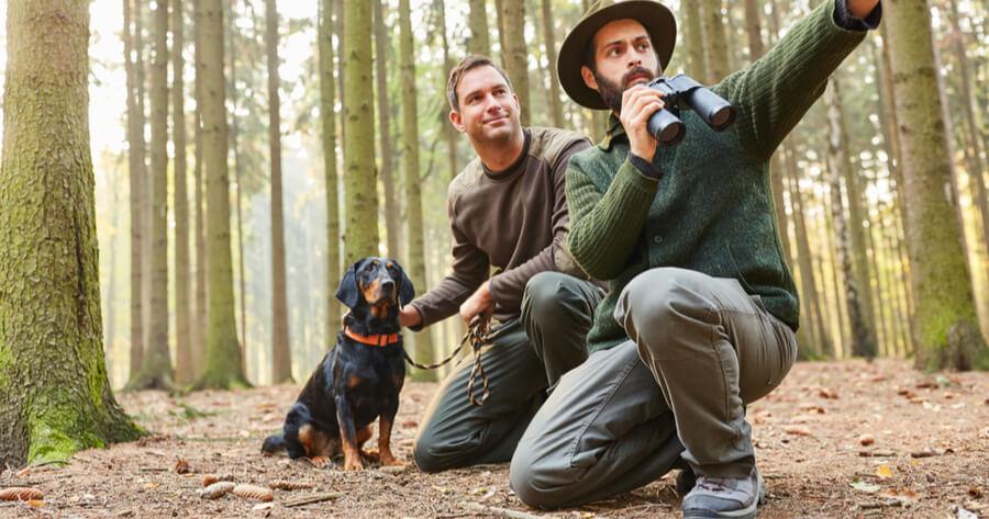 Tiroler Bracke bei Jagd