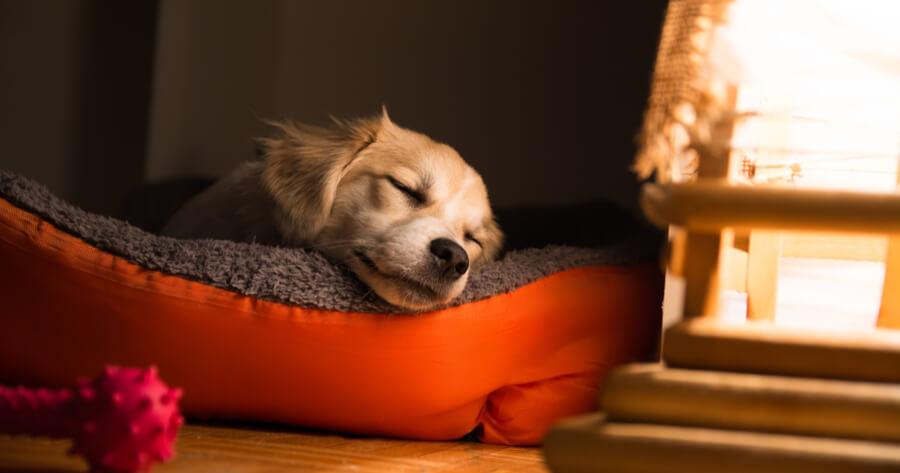 Welpe schläft in Korb