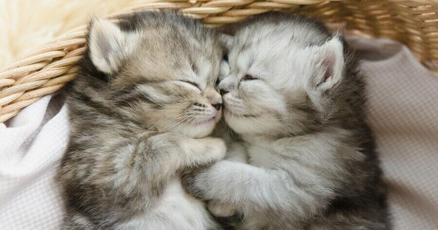 Zwei Katzenbabys
