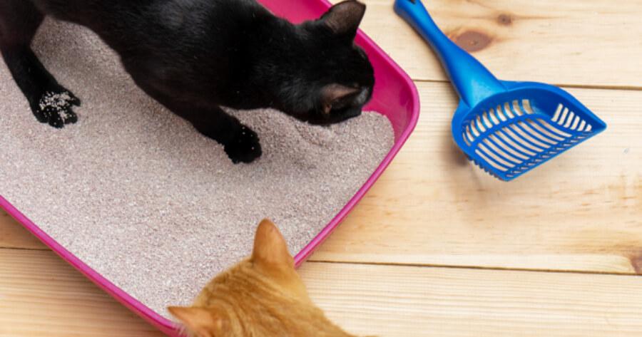 Katzen und Katzenstreu