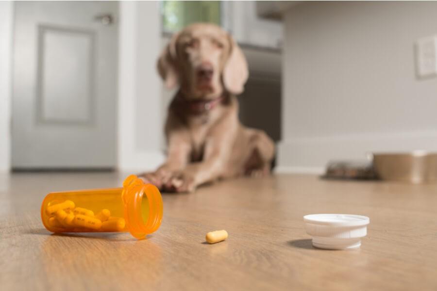 Kranker Hund Tabletten