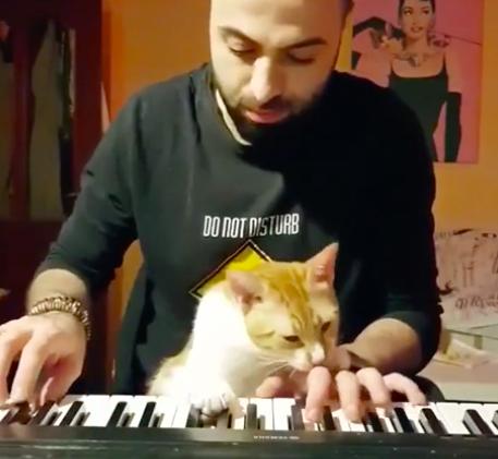 gato besando mano de su humano