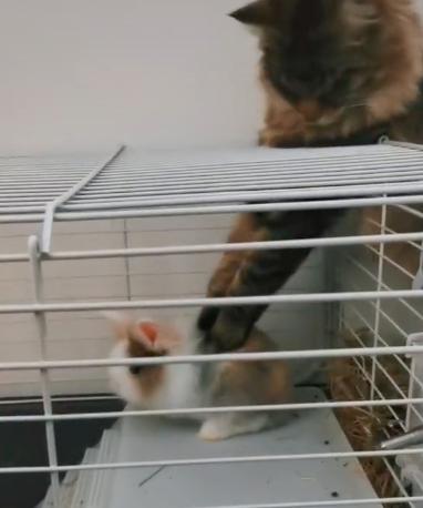 gato masajeando a un conejo