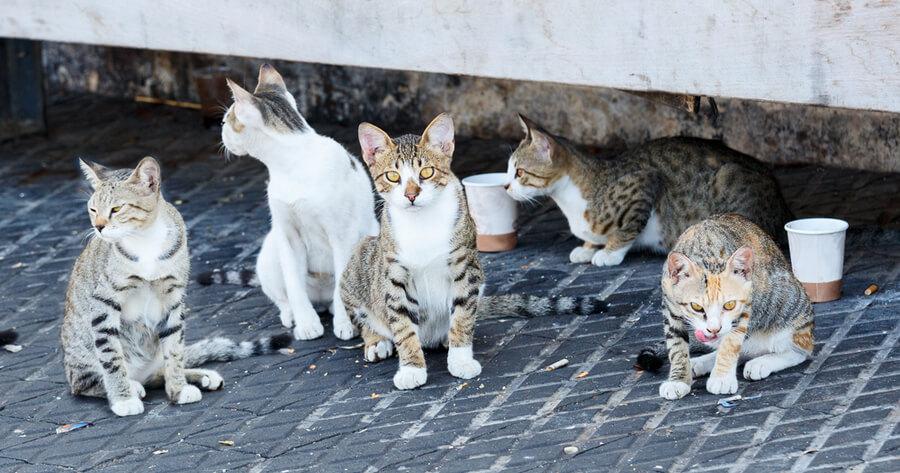 colonia de gatos en la calle