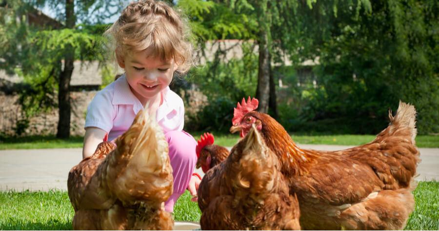 nina juega con varias gallinas