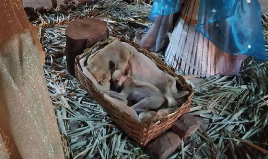 perro dormido dentro de una cesta