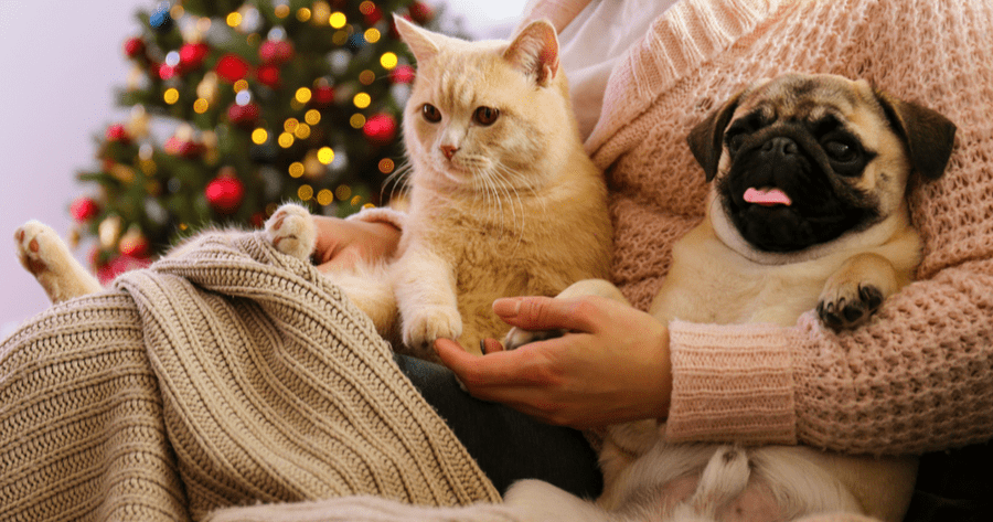 perro y gato navidad