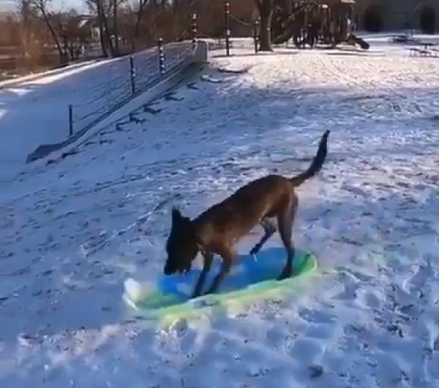 perro sobre un trineo en la nieve