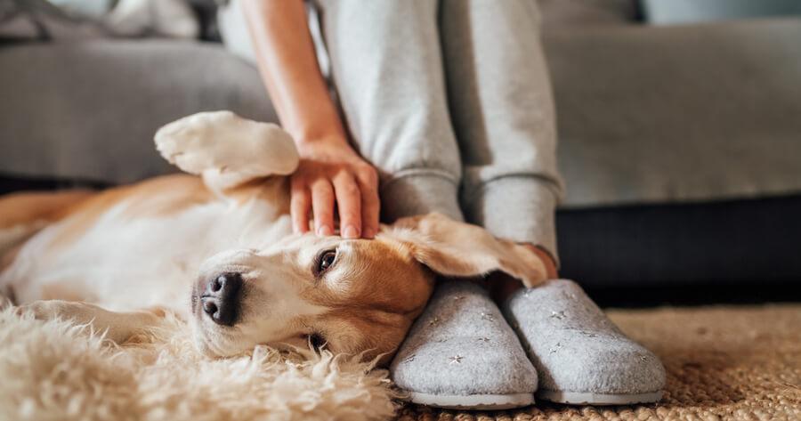 perro tumbado a los pies de una persona que le acaricia
