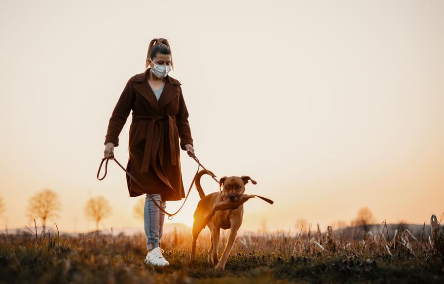una mujer pasea a su perro en el campo al atardecer