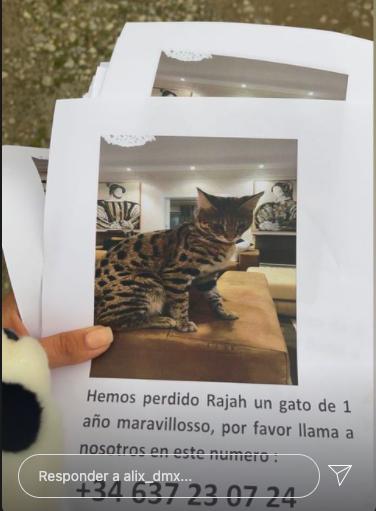 gato savannah desparecido en marbella