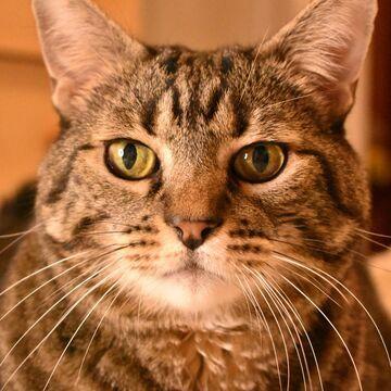 donatello gato adopcion wamiz espana