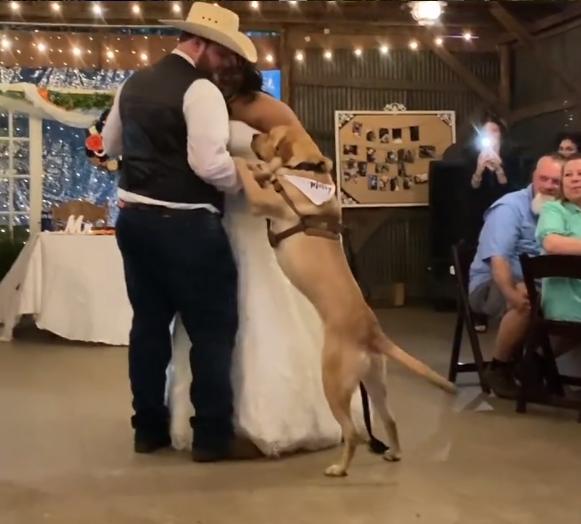 perro baile boda