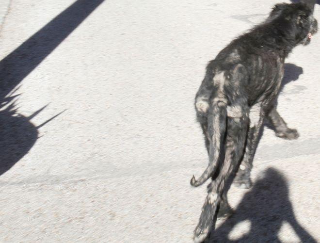 perro jose luis moreno maltratador animal