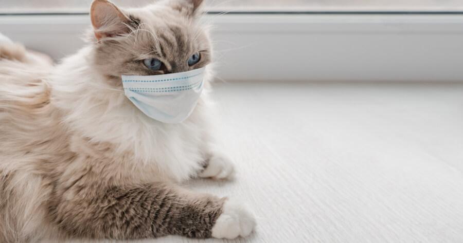 gato coronavirus cubrebocas