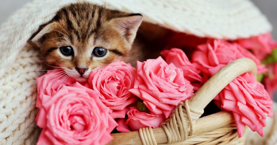 gata carinosa metida en cesta de flores