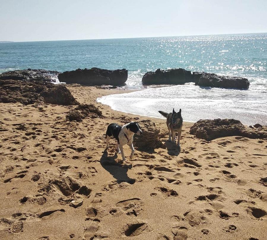 dos perros juegan en la orilla del mar