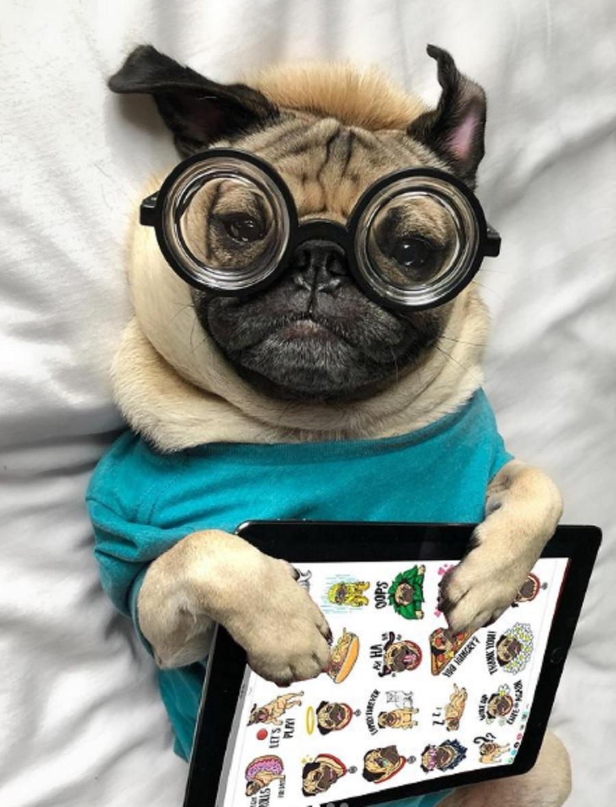 perro carlino con una tablet y gafas