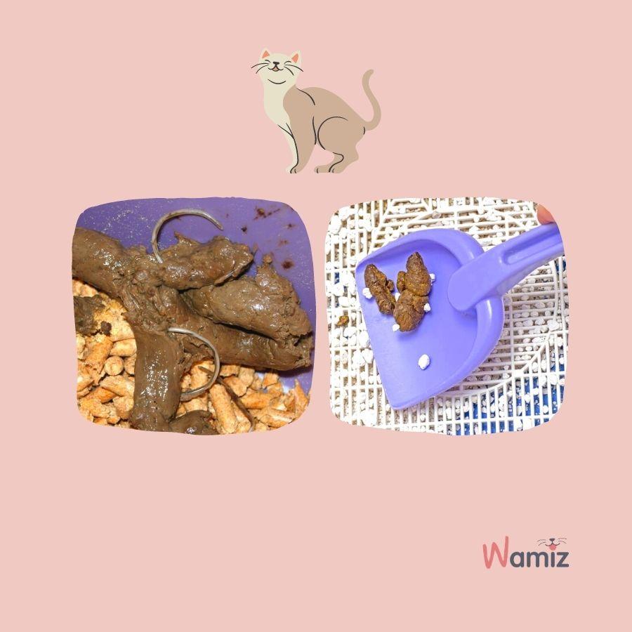 excrementos con gusanos gato