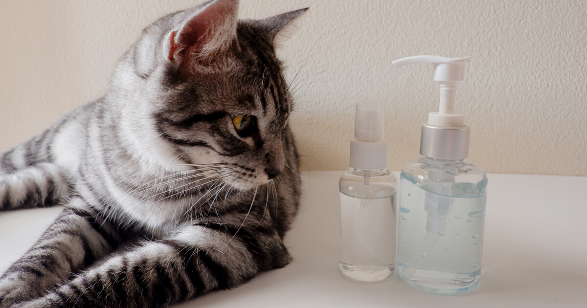 gato desinfectante