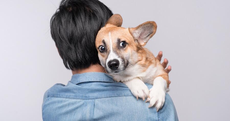 perro traumatizado