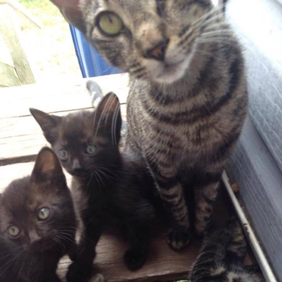 gata rescate gatitos