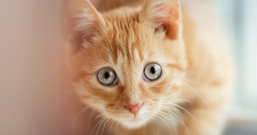 gato viene nombre