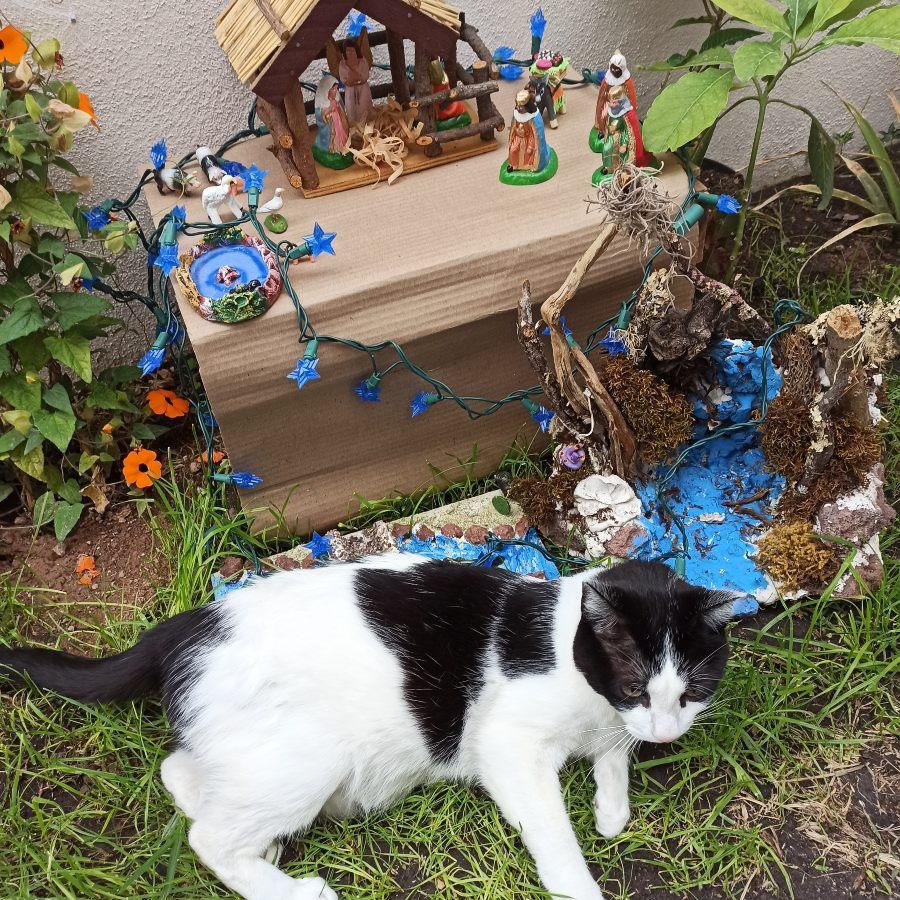 gato dentro de un portal de belen