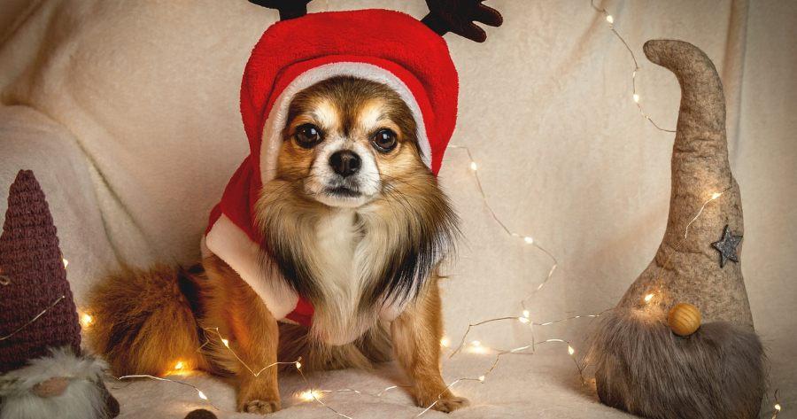 perrito navidad