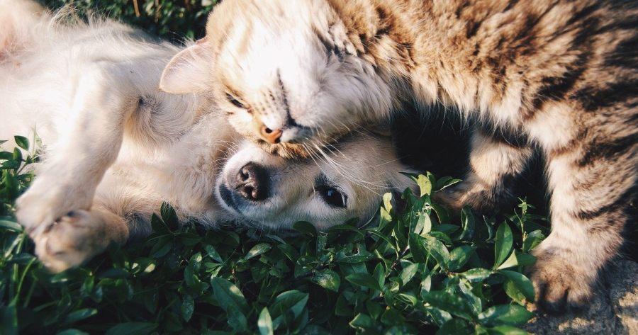 perrito gatito