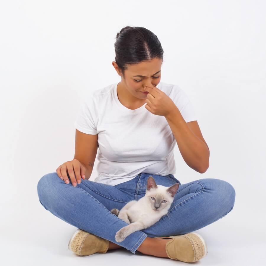 gato gases malolientes
