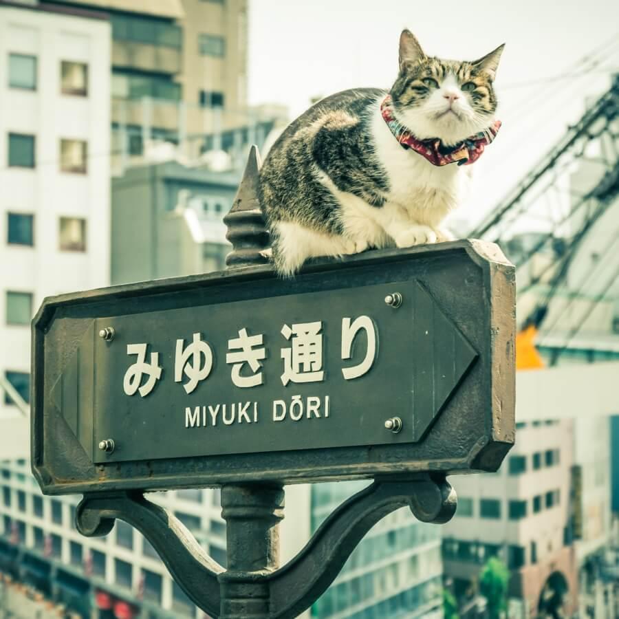 nombres para gatas en japonés