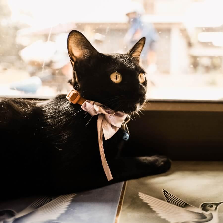 gata negra nombre