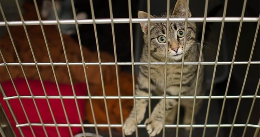 gato encerrado jaula