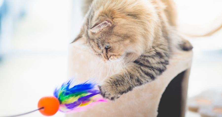 gato ve a colores