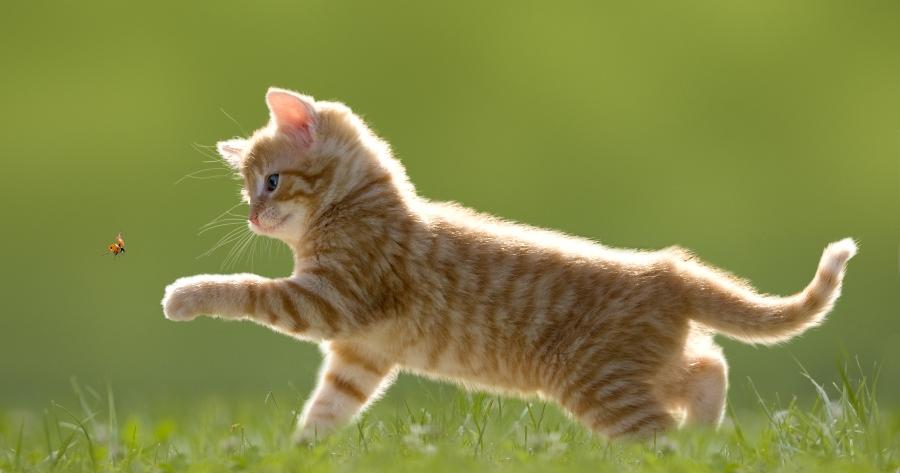 gato amarillo rayado jugando en el jardin