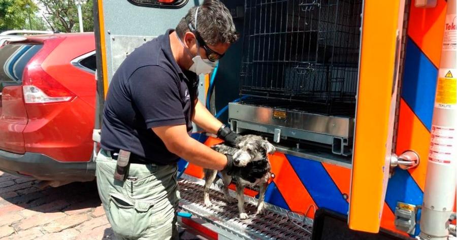 perro rescate animal