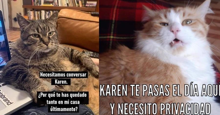 memes gatos karen